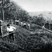 Lavorazioni boschive