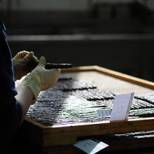 Lavorazione sigaro toscano - controllo qualità