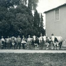 Fiera del bestiame per la festa di S. Antonio nel pratone di Forci - anni '30